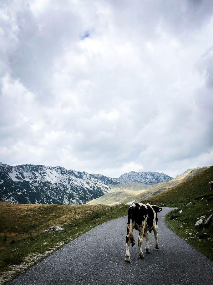 Route Durmitor